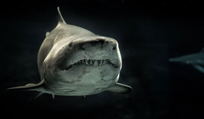Shark photography