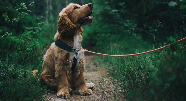 How To Become A Dog Walker: Join These 5 Sites