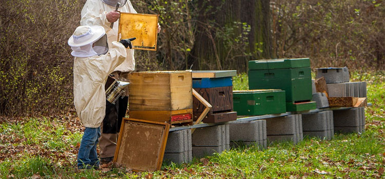 How to Make Money Beekeeping from Home